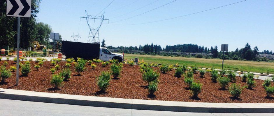 Commercial Public Works Landscape Contractor Whole Nursery